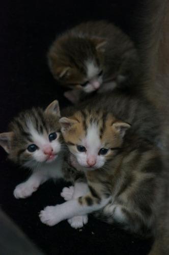 猫の赤ちゃんが生まれました_f0106597_232810.jpg