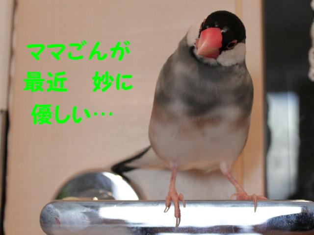 b0158061_19545119.jpg