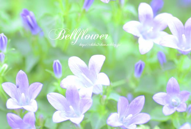 庭のお花たち♫_e0221779_15452134.jpg