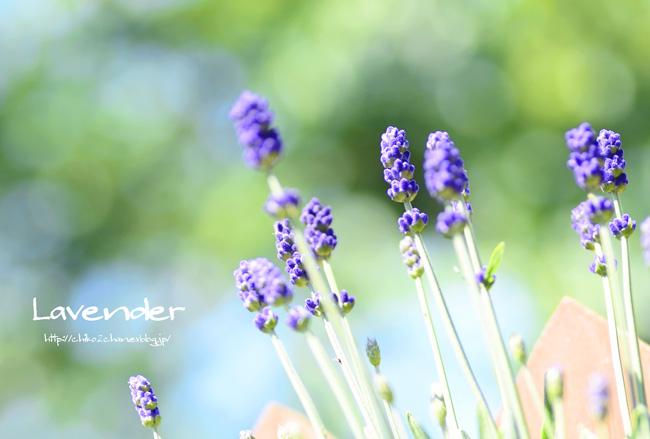 庭のお花たち♫_e0221779_1545547.jpg