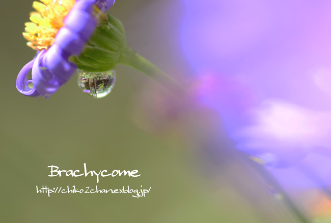 庭のお花たち♫_e0221779_15461036.jpg