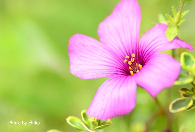 庭のお花たち♫_e0221779_15462539.jpg