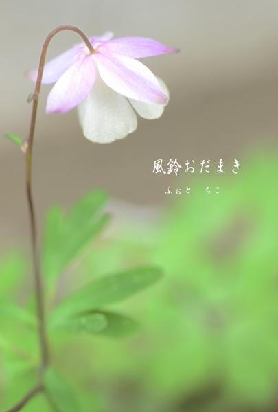 庭のお花たち♫_e0221779_15464371.jpg