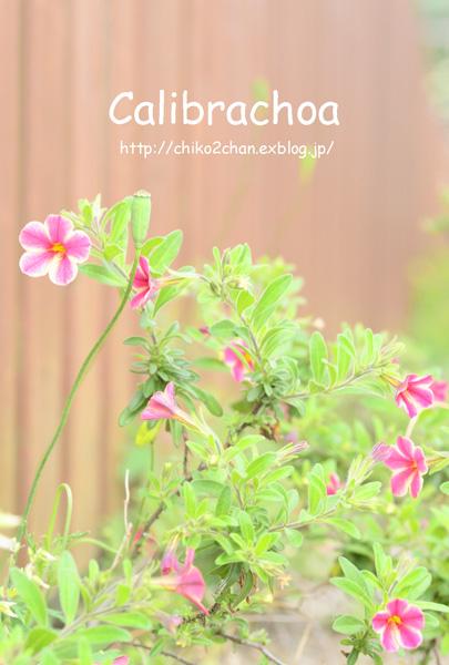 庭のお花たち♫_e0221779_15465944.jpg