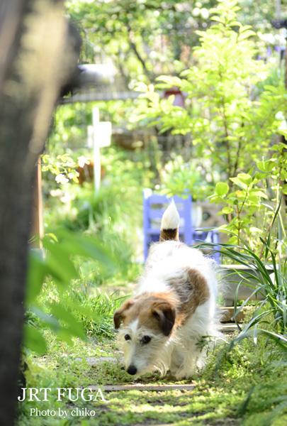庭のお花たち♫_e0221779_1674381.jpg