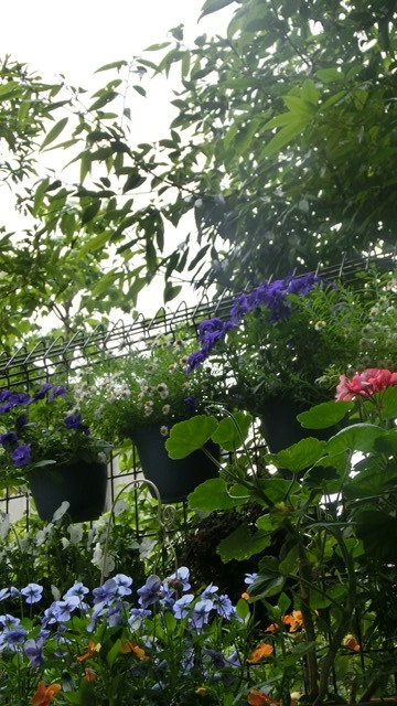 花達が教えてくれる素敵な春、自然美の素晴らしさ、花が教える素敵な環境_d0181492_8552522.jpg