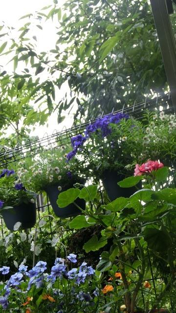 花達が教えてくれる素敵な春、自然美の素晴らしさ、花が教える素敵な環境_d0181492_8554323.jpg