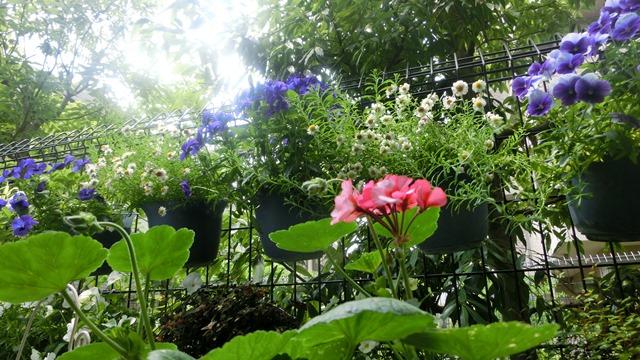 花達が教えてくれる素敵な春、自然美の素晴らしさ、花が教える素敵な環境_d0181492_855582.jpg