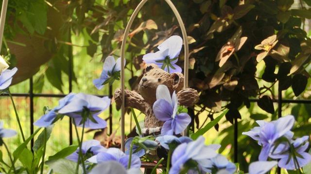 花達が教えてくれる素敵な春、自然美の素晴らしさ、花が教える素敵な環境_d0181492_8561333.jpg