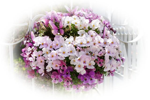 箱根星の王子さまミュージアム ★春の植物100選_b0145398_23212096.jpg