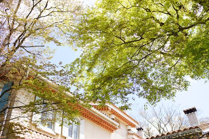 箱根星の王子さまミュージアム ★春の植物100選_b0145398_23222743.jpg