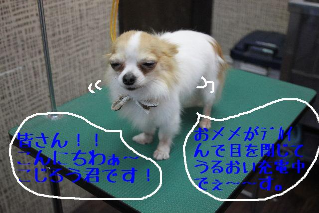 b0130018_813572.jpg