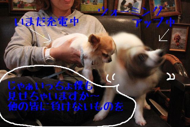 b0130018_822424.jpg