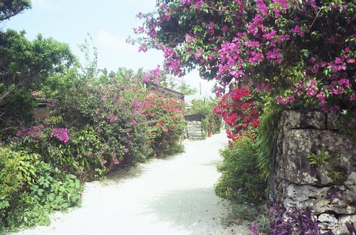 島の歌_b0212922_930326.jpg