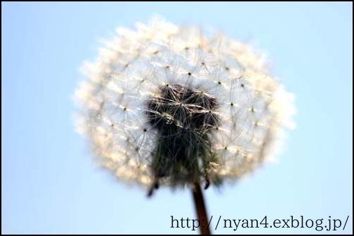 f0166234_791713.jpg
