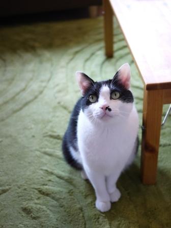 猫のお友だち 正宗くん編。_a0143140_18184825.jpg