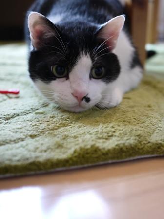 猫のお友だち 正宗くん編。_a0143140_18193793.jpg