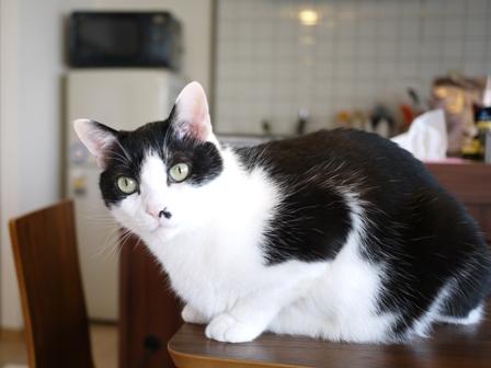 猫のお友だち 正宗くん編。_a0143140_18203125.jpg