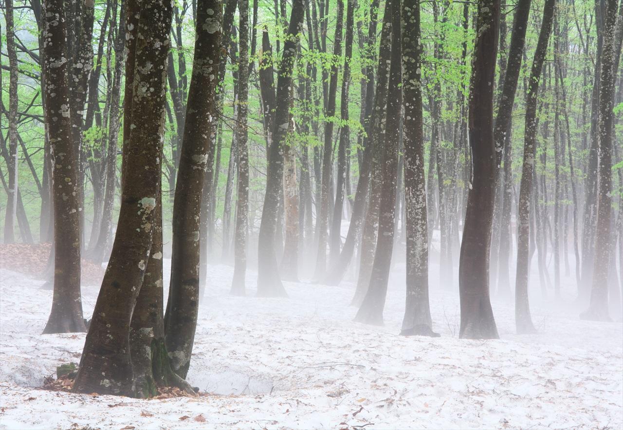 霧の美人林 3_f0018464_14584275.jpg