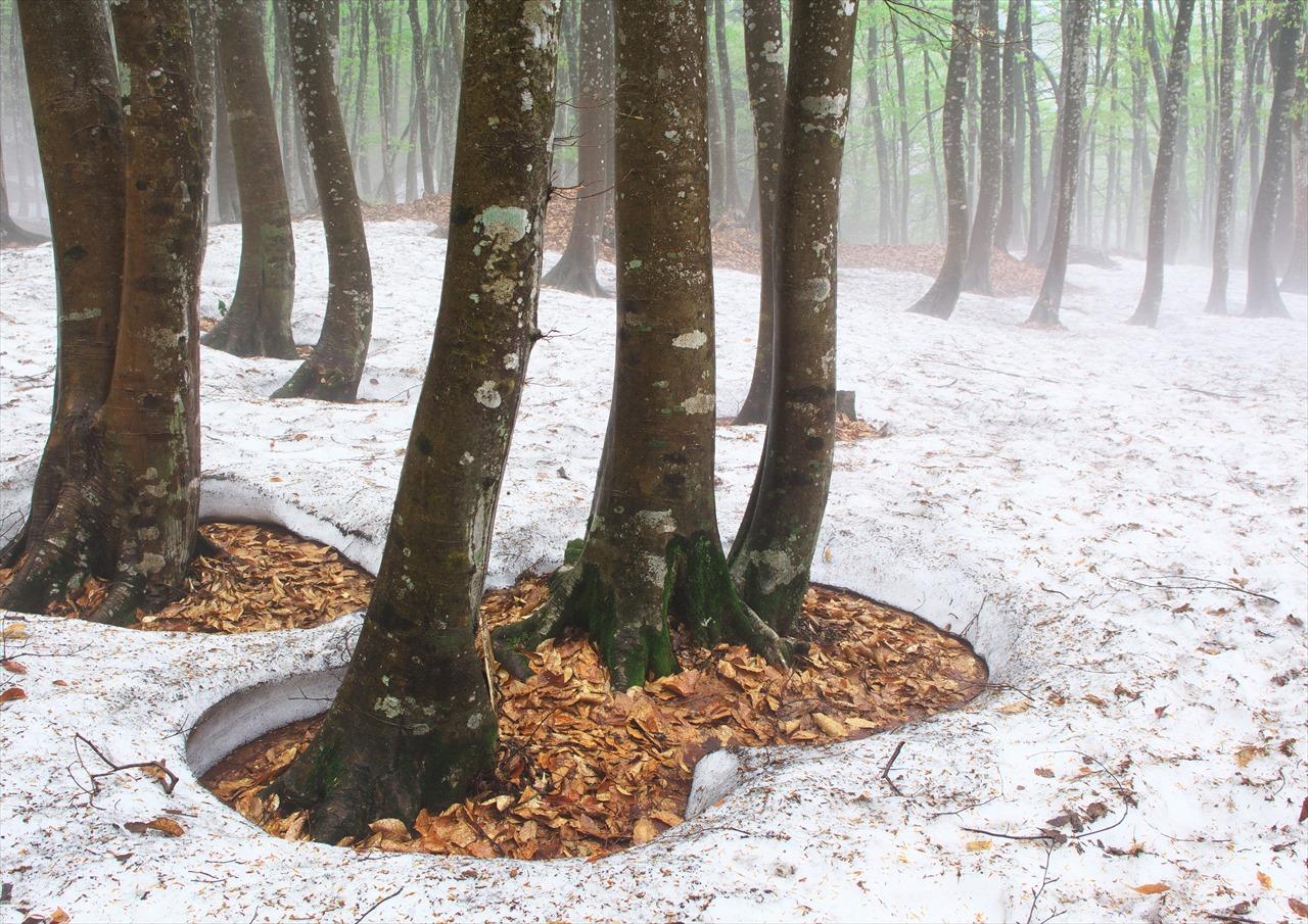 霧の美人林 3_f0018464_1562910.jpg