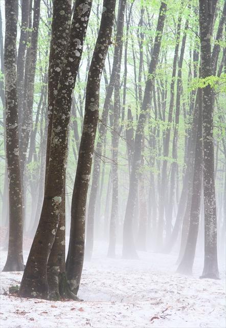 霧の美人林 3_f0018464_1595713.jpg