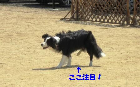 c0171368_22102322.jpg