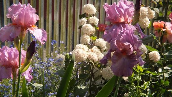 紅花ヒメウツギがきれいです_b0214473_2146377.jpg