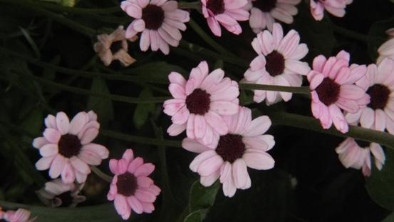 紅花ヒメウツギがきれいです_b0214473_21505615.jpg