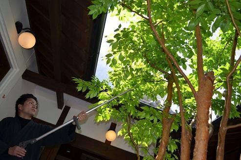 姫シャラの木 救出作戦_d0230676_12135757.jpg