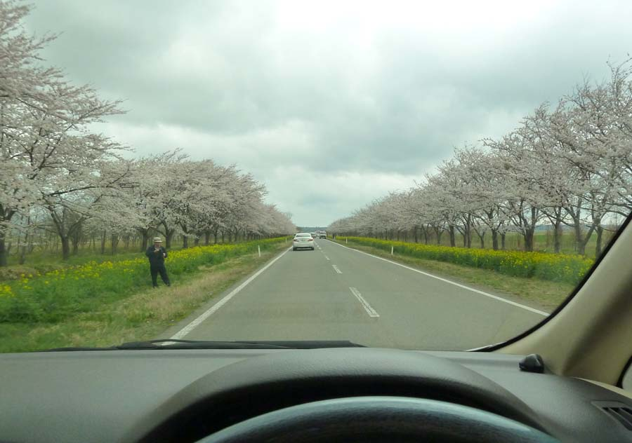 桜と菜の花ロード_f0150893_11504665.jpg
