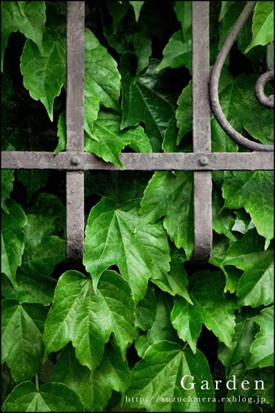 Garden_f0100215_0193410.jpg
