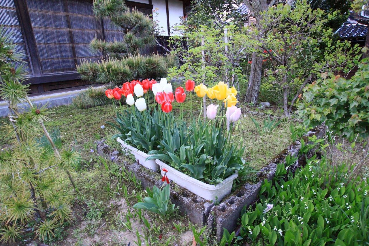 ゴールデンウークのアルバム奈良の実家と石川の実家にて_d0148223_861150.jpg