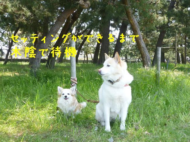 b0138430_14502416.jpg