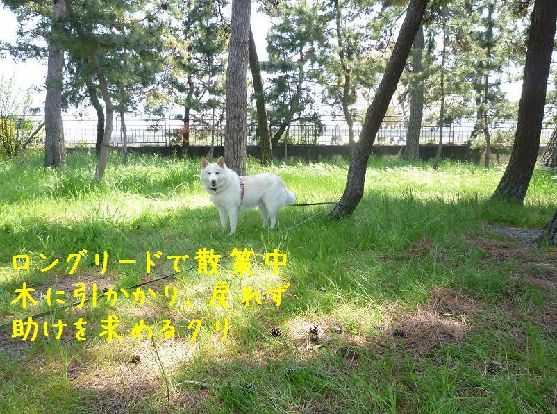b0138430_1458305.jpg