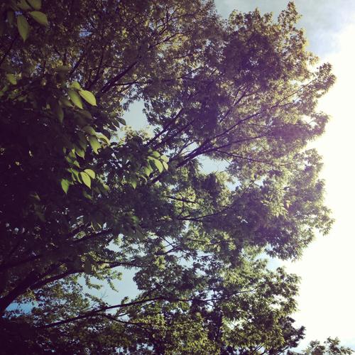 森の山小屋_e0131432_1743442.jpg