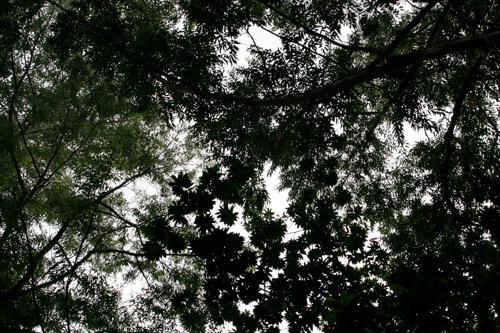 木のトンネル_e0129046_13153533.jpg