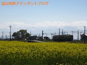 富山地鉄の花便り2013@チューリップと菜の花_a0243562_1631760.jpg