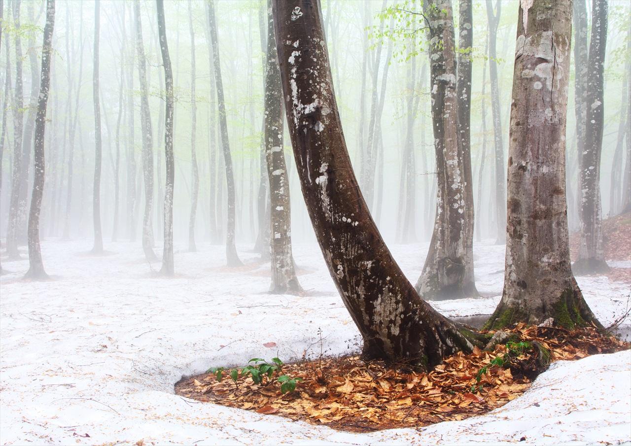 霧の美人林 4_f0018464_681128.jpg