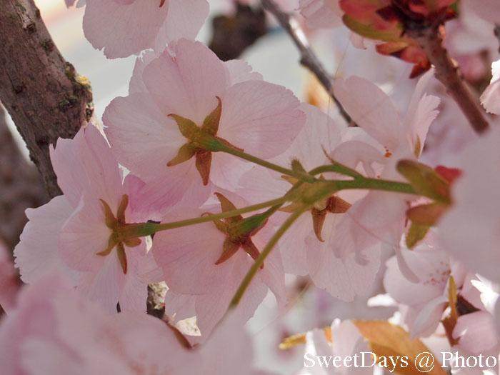 Victoria(ビクトリア) - SpringTime_e0046675_12262190.jpg