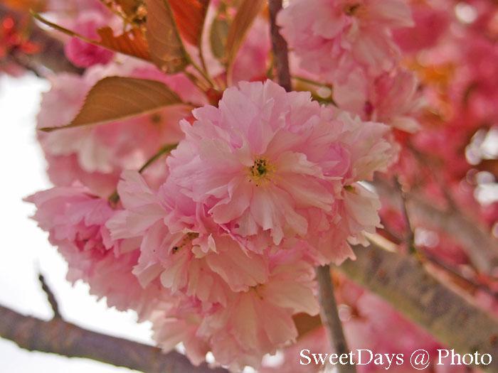 Victoria(ビクトリア) - SpringTime_e0046675_12264515.jpg