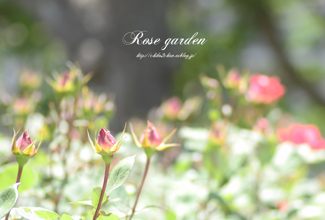 Rose Photo 2013 春~① 八幡山の洋館_e0221779_17281517.jpg