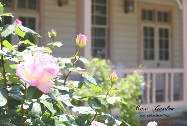 Rose Photo 2013 春~① 八幡山の洋館_e0221779_17291926.jpg
