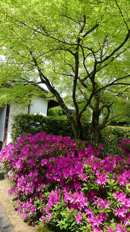 GW中盤(?)も京都!_a0188798_852999.jpg