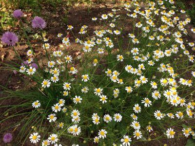 ガーデン_f0087202_10372974.jpg