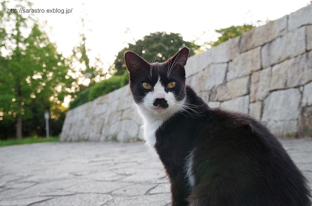 ノラ猫_e0028416_23381328.jpg