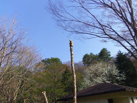 五月晴れの春キャンプ!_e0036217_18553025.jpg