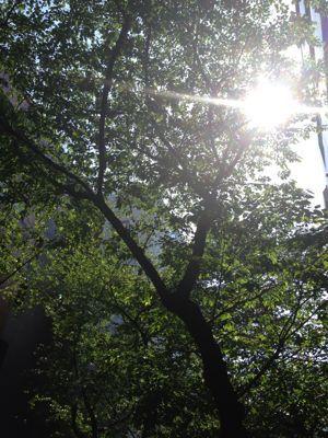 オーラソーマと瞑想。_b0253627_165574.jpg
