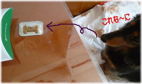 狂犬病予防注射にいってきました~_c0058727_11541980.jpg