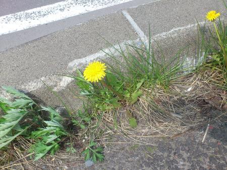 春をみつけて_b0106766_23295184.jpg