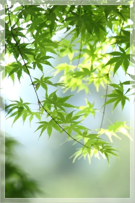 慈光寺 新緑の色_e0027083_12102393.jpg